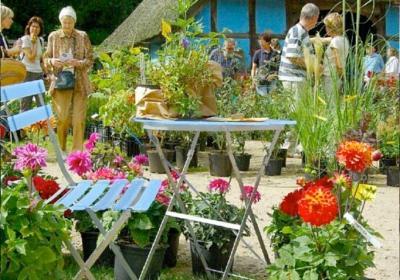 Pflanzenmarkt im Sommer